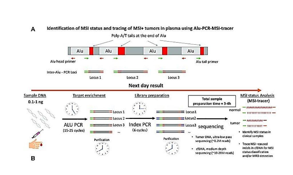 Imagen: Diagrama esquemático para la identificación de estado de MSI y rastreo de tumores MSI+ en plasma con el trazador Alu-PCR-MSI (Fotografía cortesía del Instituto de Cáncer Dana-Farber)