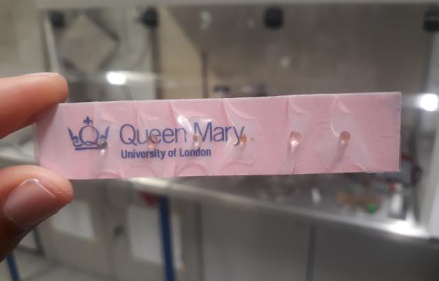 Imagen: La novedosa prueba de olor basada en cápsulas (Fotografía cortesía de la Universidad Queen Mary de Londres)