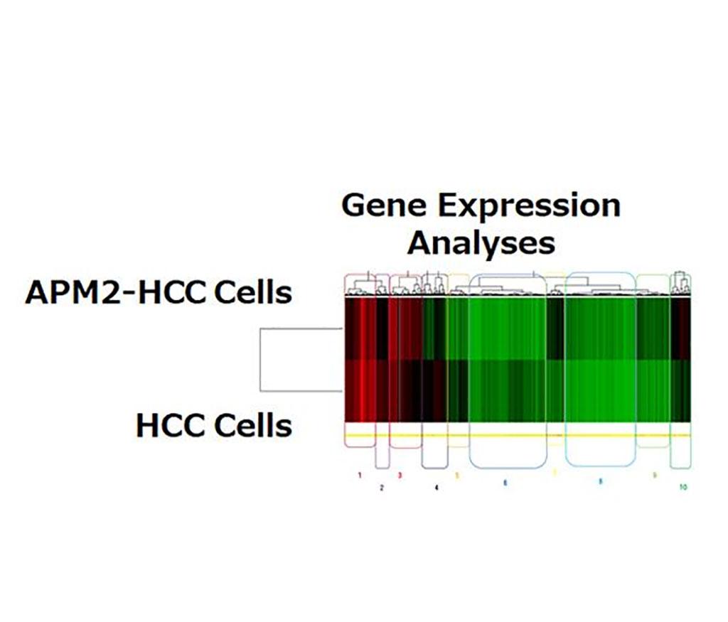 Imagen: La sobreexpresión de APM2 aumenta la expresión del gen ERCC6L (Fotografía cortesía de la Universidad de Niigata)