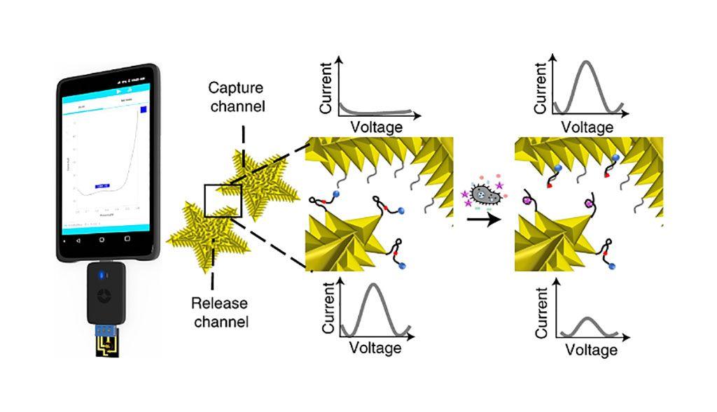Imagen: Integración de ADNzimas programables con la lectura eléctrica para una detección bacteriana rápida y sin cultivos utilizando una plataforma portátil (Fotografía cortesía de la Universidad McMaster)