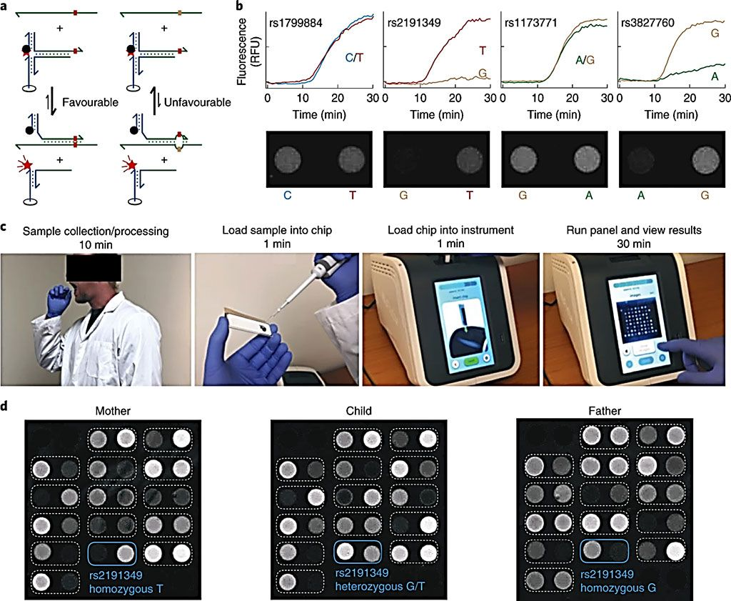 Imagen: (c) Ilustración del flujo de trabajo para la prueba de muestras de hisopos bucales humanos en la PCR toroidal. El tiempo total de respuesta es inferior a una hora. (d) Genotipificación de 15 loci SNP a partir de muestras de hisopos bucales de un trío familiar (Fotografía cortesía de Rice University)