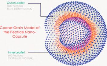 Imagen A: John Tomich y su equipo del laboratorio de investigación de la Universidad Estatal de Kansas combinaron dos secuencias relacionadas de aminoácidos para formar una nanocápsula hueca muy pequeña, similar a una burbuja (Fotografía cortesía de la Universidad Estatal de Kansas).