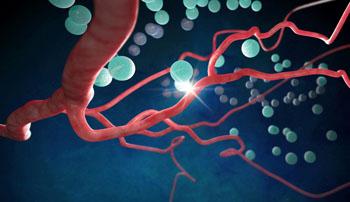 Imagen: La ilustración muestra la comunicación en el cerebro entre las neuronas y los vasos sanguíneos (Fotografía cortesía de Emma Vought, Universidad Médica de Carolina del Sur).