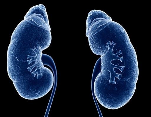 Imagen: Un nuevo estudio sugiere que los medios de contraste intravenosos utilizados en la TC no están relacionados con el aumento del riesgo de lesión renal aguda (Fotografía cortesía de News Medical).