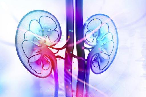Imagen: Los investigadores usaron la IRM-DTI para detectar la perfusión anormal en los riñones, y predecir el riesgo de fibrosis renal (Fotografía cortesía de la Universidad de Osaka).