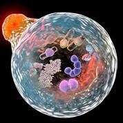 Imagen: Un compuesto de ferritina superparamagnética dirigido contra una célula tumoral (Fotografía cortesía de la NUST-MISiS).