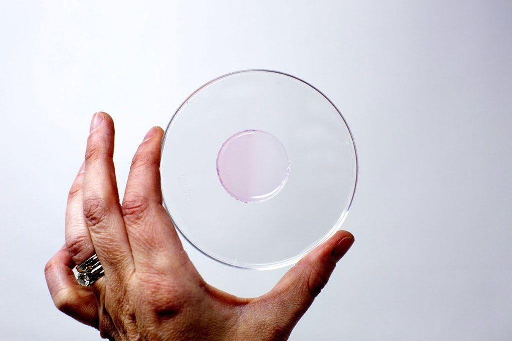 Imagen: Un círculo del hidrogel, irradiado en la mitad izquierda, mientras que la mitad derecha no está irradiada (Fotografía cortesía de la ASU)