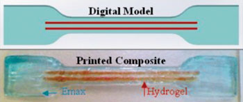 Image: Fiber reinforced hydrogels printed in a single-step process (Photo courtesy of the University of Wollongong).
