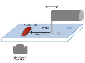 Image: Schematic representation of the experimental setup (Photo courtesy of Israel Institute of Technology).