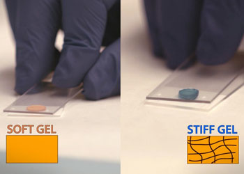 Image: A stiff injectable hydrogel could help strengthen damaged heart walls (Photo courtesy of ACS).
