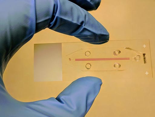 Image: The SNDA-AST quickly analyzes bacteria isolated from patients with infections (Photo courtesy of Technion).