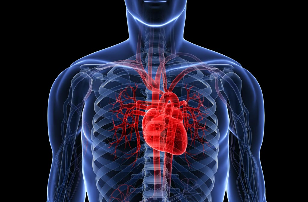 Image: A new study shows mistreatment of cardiovascular disease patients impacts their survival (Photo courtesy of Getty Images).