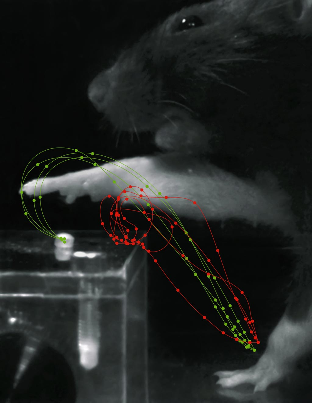 Image: Red trajectories show grasp movements after stroke, while green trajectories show rehabilitation (Photo courtesy of Tabea Kraus/ ETH).