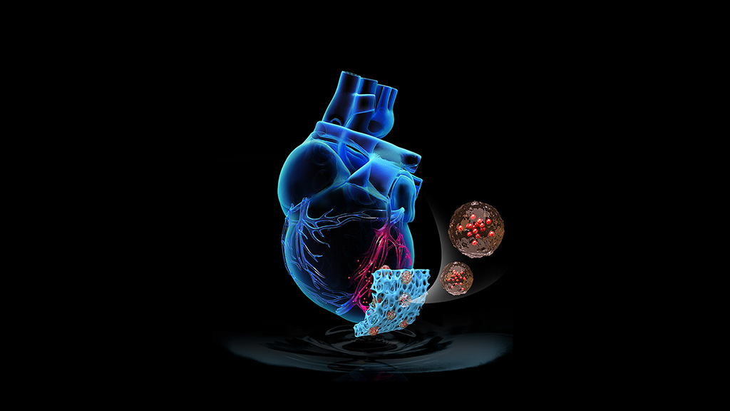 Image: A synthetic cardiac patch boosts recovery of damaged hearts (photo courtesy of NC State University)
