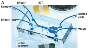 Image: Microfluidic device uses sound waves to sort tumor from white-blood cells as they flow through the channel from left to right (IDT [interdigital transducers] are sound source) (Photo courtesy of Ding X, et al).