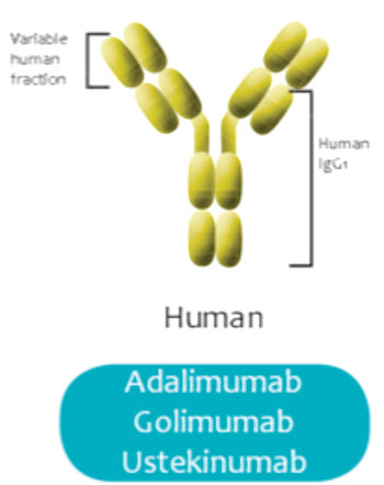 Image: CE marking has been issued for a test to monitor levels of the fully human monoclonal antibody ustekinumab (Photo courtesy of Theradiag).