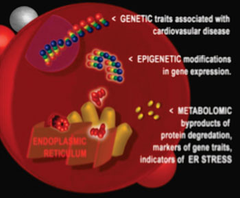 Image: Using DNA and RNA markers, ER stress was uncovered as the biological process responsible for the increased risk of heart disease events (Photo courtesy of Mark Dubowski, Duke University).