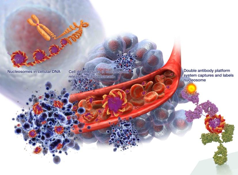 Схематическое изображение принципа анализа NuQ на обнаружение биомаркера для диагностики рака предстательной железы (фото любезно предоставлено компанией VolitionRx).