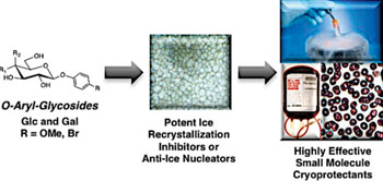 Image: The cryopreservation of red blood cells using novel molecules (Photo courtesy of the American Chemical Society).