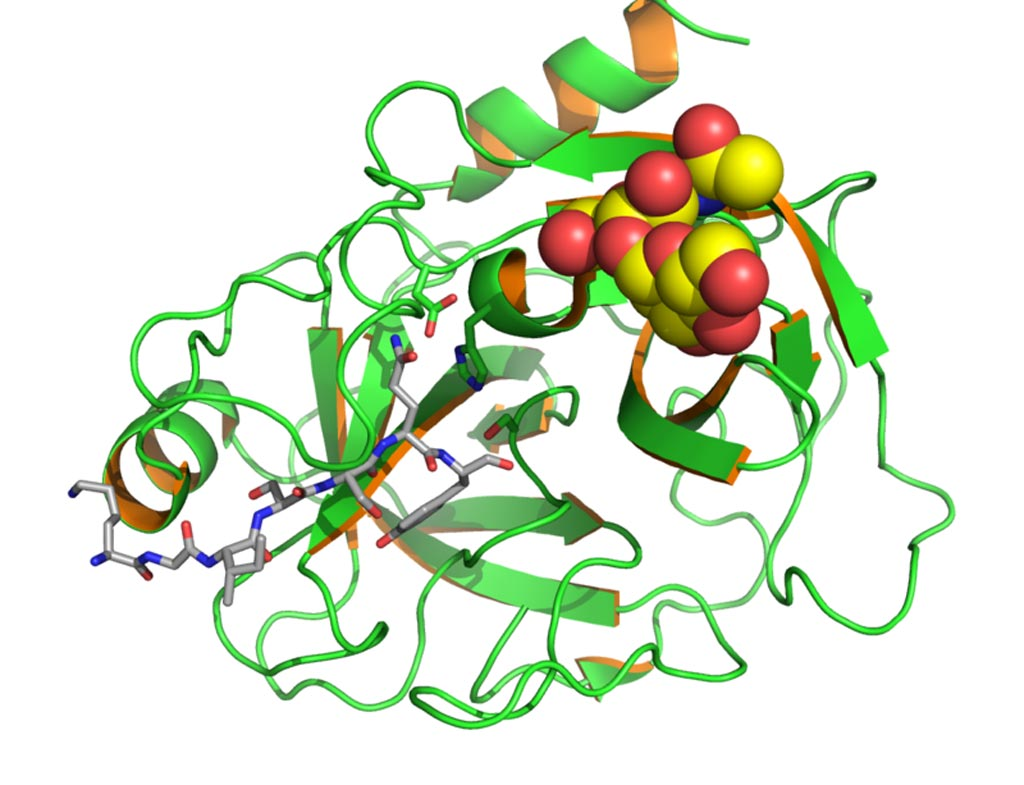 Image: A structural model of human prostate specific antigen (PSA) with bound substrate complexed with antibody (Photo courtesy of Wikimedia Commons).