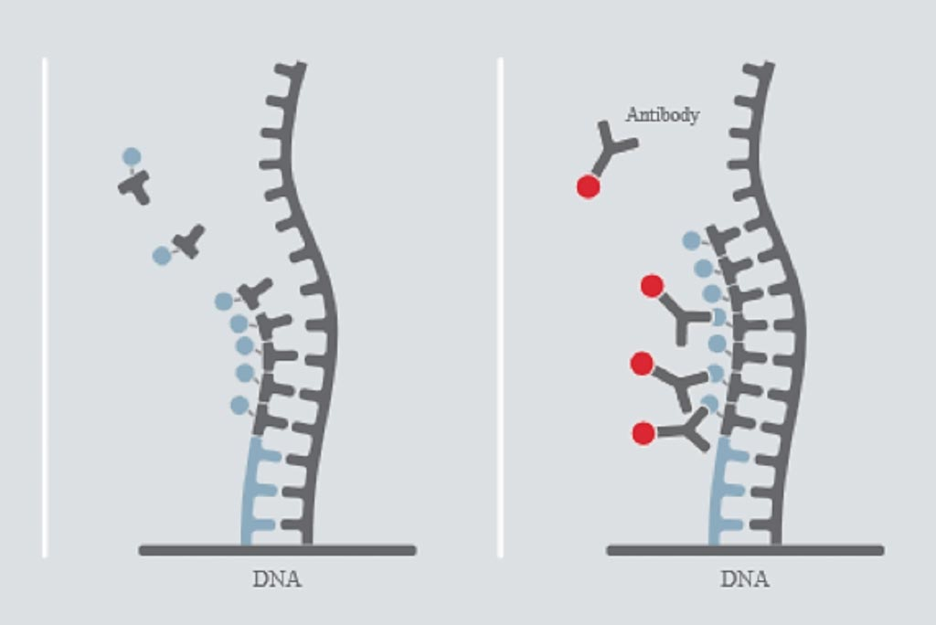 Image: A diagram of the DiviTum assay: BrdUTP is incorporated into a solid-phase DNA-strand. Incorporated BrdU is detected using an anti-BrdU monoclonal antibody conjugated to the signal generating enzyme alkaline phosphatase. The level of BrdU incorporated over time is proportional to the level of thymidine kinas activity in the sample (Photo courtesy of Biovica).