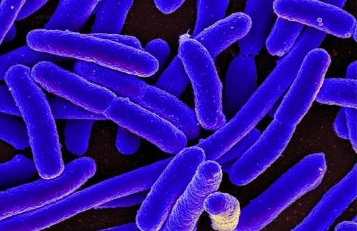 Image: A scanning electron microscope (SEM) image of Escherichia coli (E. coli) (Photo courtesy of NIAID).