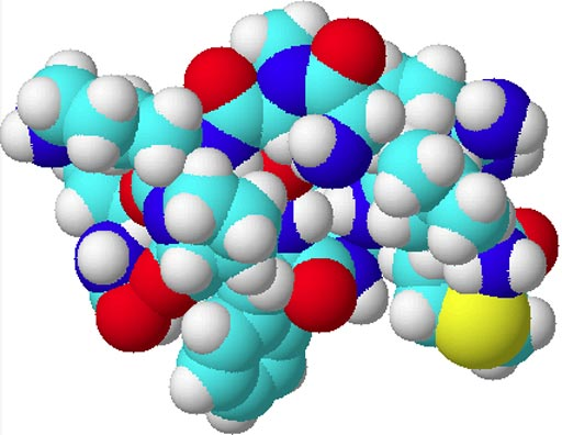 Image: A space-filling model of substance P (Photo courtesy of Wikimedia Commons).