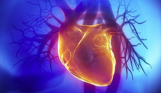 Image: Recent studies suggest S-adenosylhomocysteine (SAH), and not Hcy, plays a role in cardiovascular disease (Photo courtesy of Shutterstock).