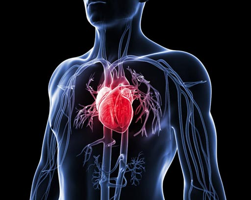 Image: Investigators worked with heart stem cells to study the mechanism that causes certain areas of the genome to become bound to the nuclear membrane and the ramifications of being bound in this location (Photo courtesy of iStock).