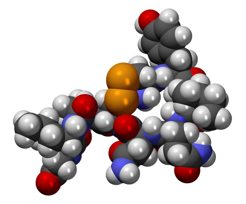 Image: A CPK model of the oxytocin molecule (Photo courtesy of Wikimedia Commons).