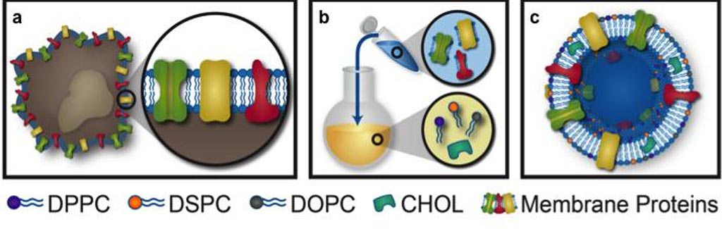 Image: The process of extracting proteolipid material, protein enrichment, and vesicular formulation of leukosomes (Photo courtesy of the Houston Methodist Research Institute).
