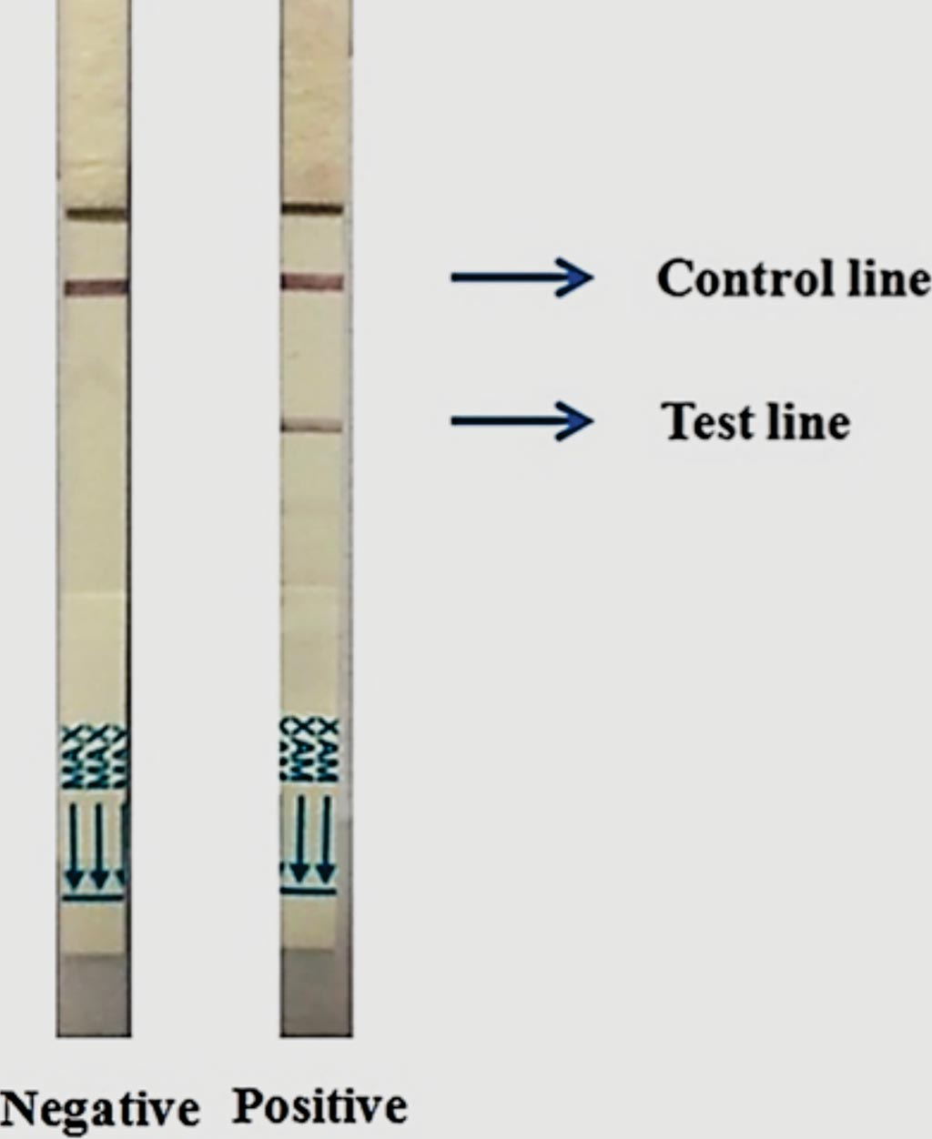 Image: Two Cholkit dipsticks showing characteristic negative (left image) and positive (right image) results after 15 minutes sample run (Photo courtesy of International Centre for Diarrhoeal Disease Research).