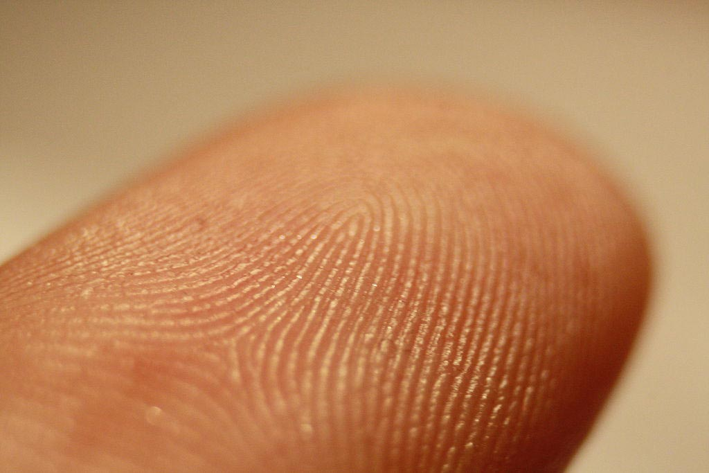 Image: The friction ridges on a finger (Photo courtesy of Wikimedia Commons).