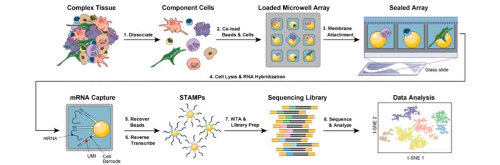 Принцип действия недорогой платформы Seq-Well для секвенирования РНК одиночных клеток (фото любезно предоставлено Shalek Lab).