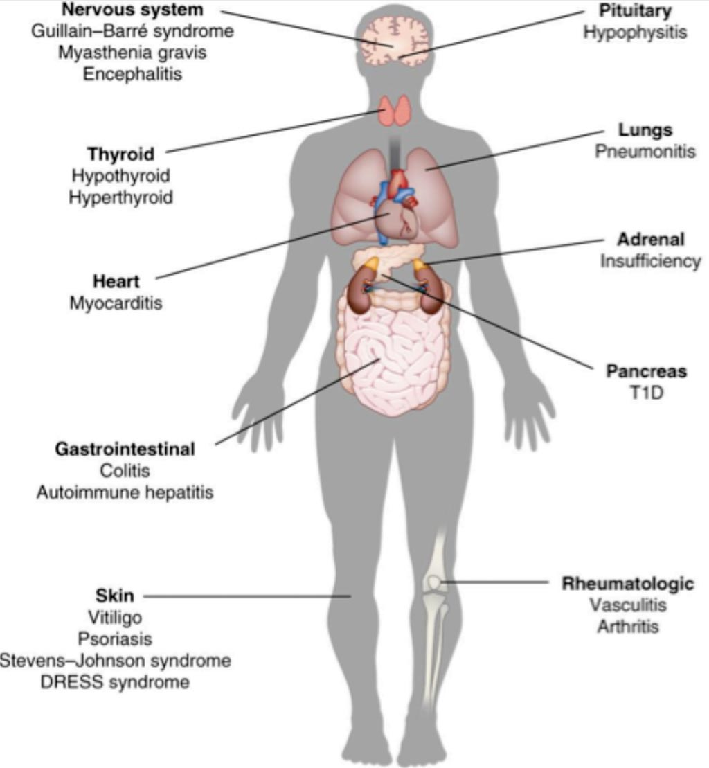 Image: A diagram of side effects of immunotherapy (Photo courtesy of Kim Caesar).