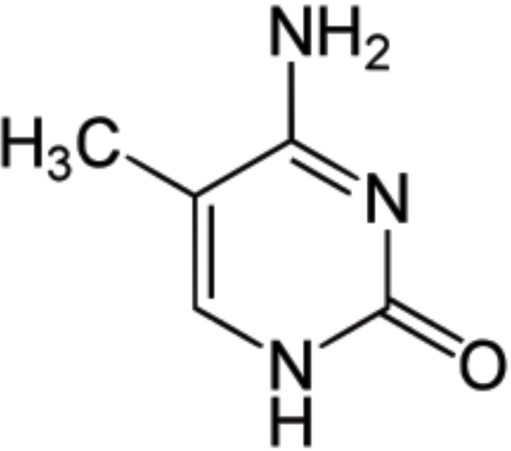 Image: 5-Methylcytosine is a methylated form of the DNA base cytosine that may be involved in the regulation of gene transcription (Photo courtesy of Wikimedia Commons).