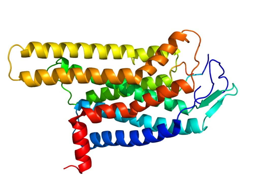 Image: A molecular model of the Melanocortin 4 receptor (Mc4r) protein (Photo courtesy of Wikimedia Commons).