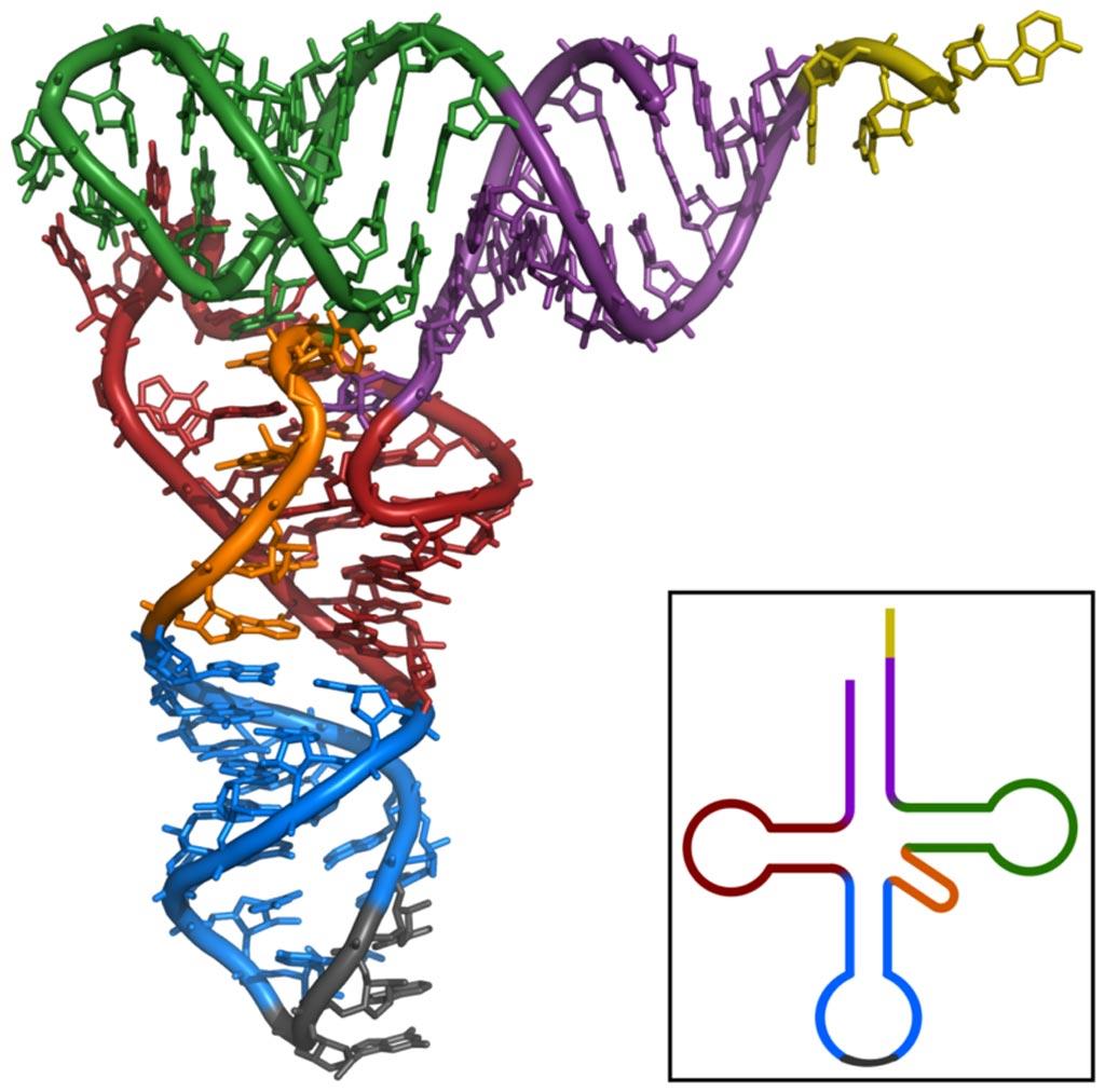 : A tertiary structure of transfer RNA (tRNA) (Photo courtesy of Wikimedia Commons).