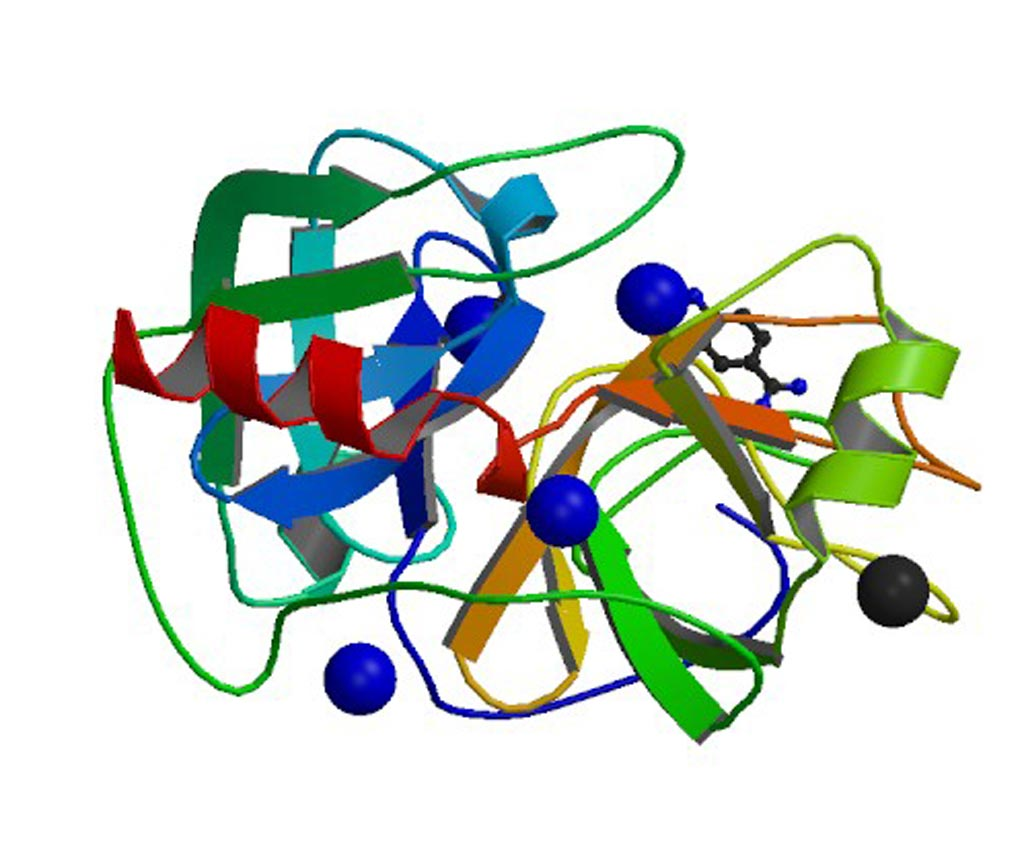 Image: Human Kallikrein 4 (KLK4) protein complexed with nickel and p-aminobenzamidine  (Photo courtesy of Wikimedia Commons).