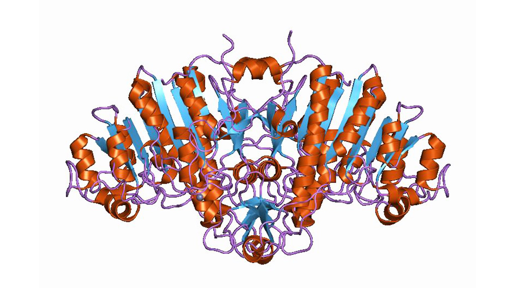 Image: Cartoon representation of the molecular structure of alkaline phosphatase protein (Photo courtesy of Wikimedia Commons)