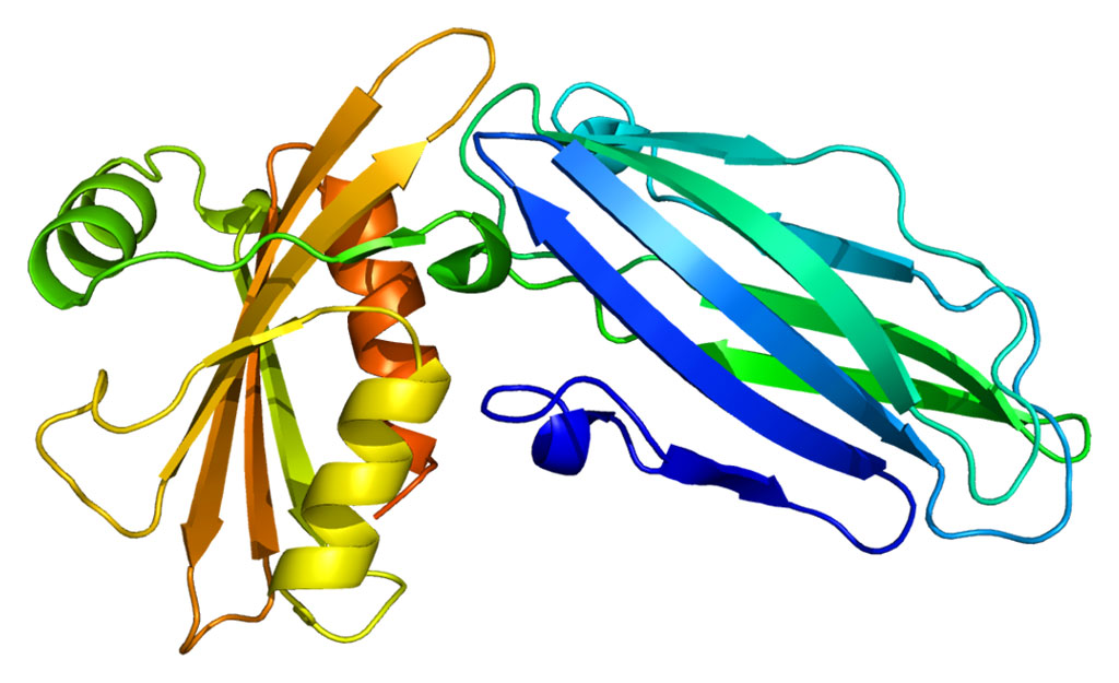Image: Structure of the AP2A2 protein (Photo courtesy of Wikimedia Commons)
