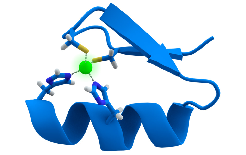 Image: Cartoon representation of the zinc-finger motif of proteins. The zinc ion (green) is coordinated by two histidine and two cysteine amino acid residues (Photo courtesy of Wikimedia Commons)