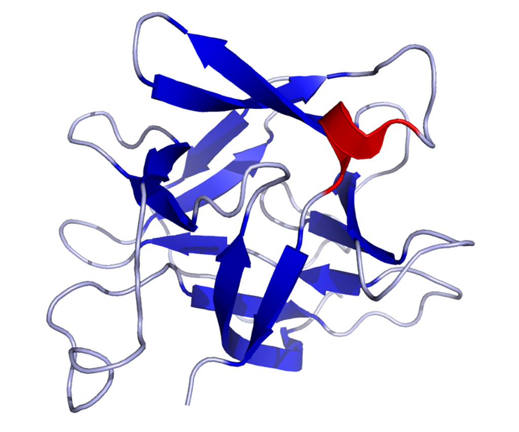 Image: Solution structure of IL-18 (interleukin 18) protein (Photo courtesy of Wikimedia Commons)