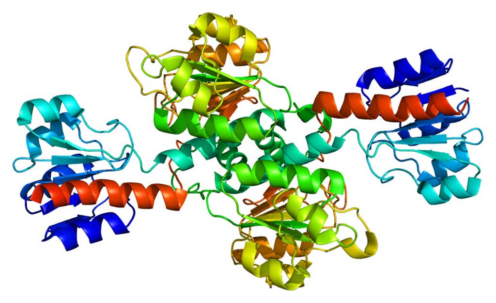 Image: Structure of the phosphoglycerate dehydrogenase (PHGDH) enzyme (Photo courtesy of Wikimedia Commons)