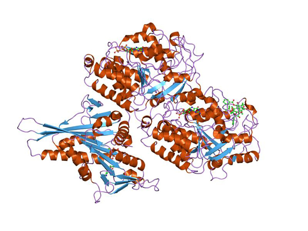 Image: Representation of the molecular structure of tubulin protein (Photo courtesy of Wikimedia Commons)