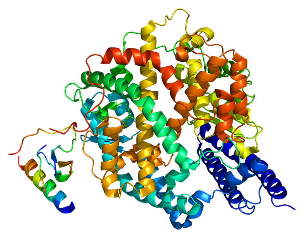 Image: Structure of the angiotensin-converting enzyme 2 (ACE2) protein (Photo courtesy of Wikimedia Commons)