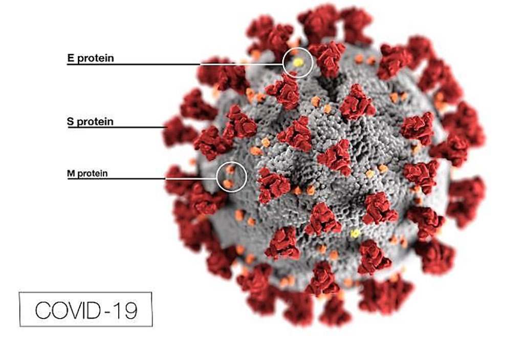 Image: This illustration reveals ultrastructural morphology exhibited by coronaviruses. Note the spikes that adorn the outer surface of the virus, which impart the look of a corona surrounding the virion, when viewed electron microscopically (Photo courtesy of Centers for Disease Control and Prevention).