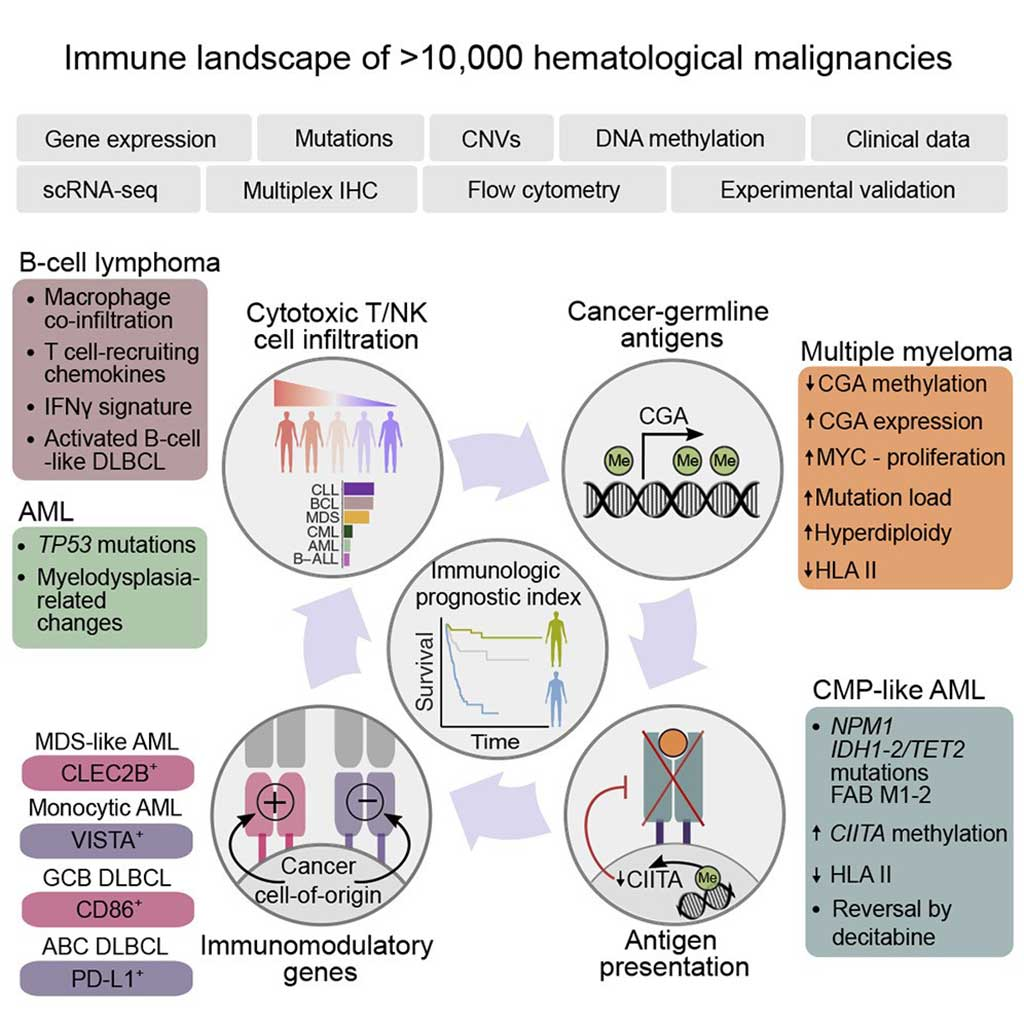 Image: The Immunogenomic Landscape of Hematological Malignancies (Photo courtesy of Helsinki University Hospital).