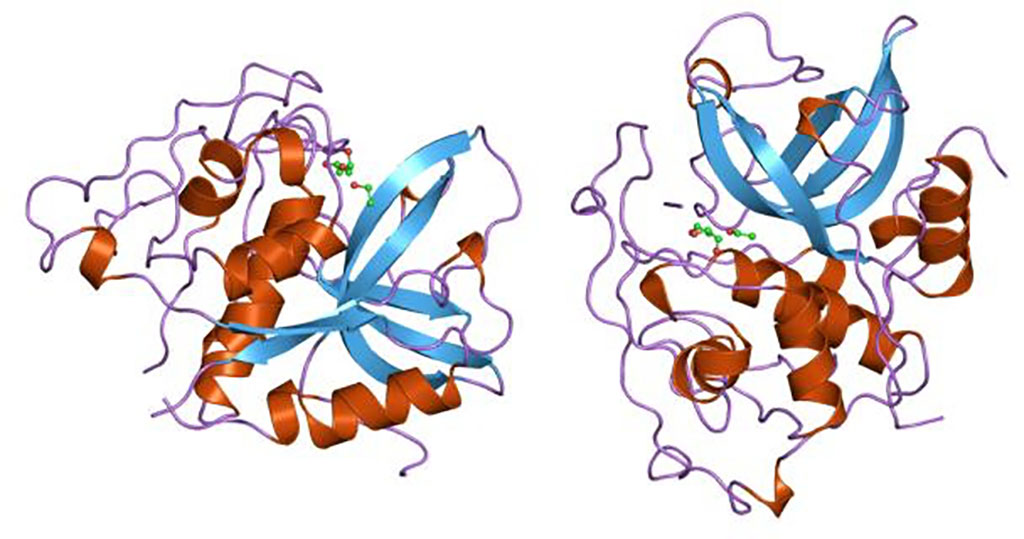 Image: Representation of the molecular structure of the cathepsin B (catB) protein (Photo courtesy of Wikimedia Commons)