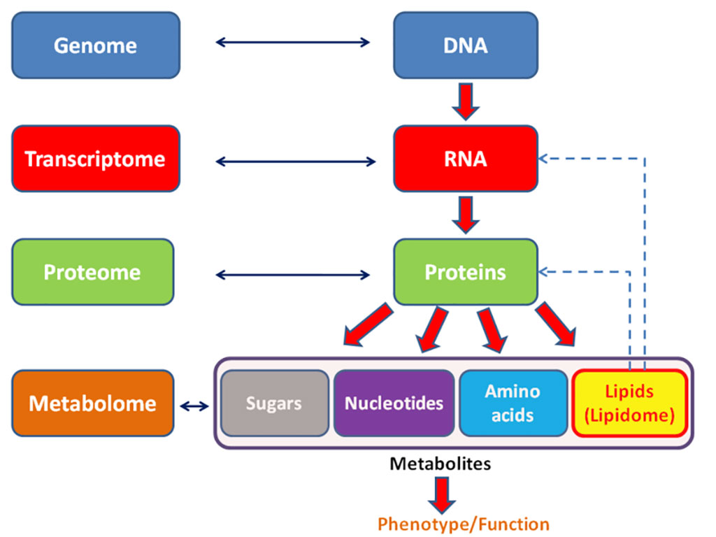 Image: General schema showing the relationships of the genome, transcriptome, proteome, and metabolome (the domain of clinical metabolomics) (Photo courtesy of Wikimedia Commons)